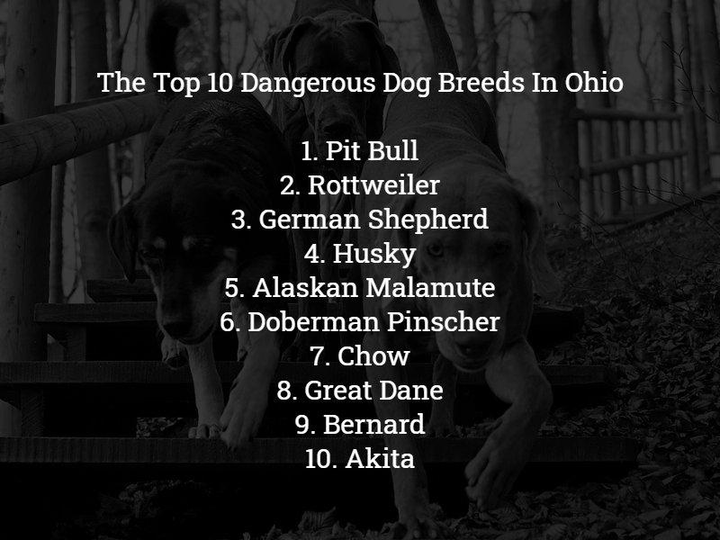 Top 10 Dangerous Dog Breeds in Ohio